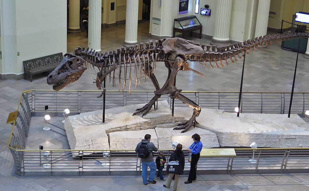 Sue at the Field Museum